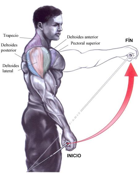 ejercicios de hombros y brazos