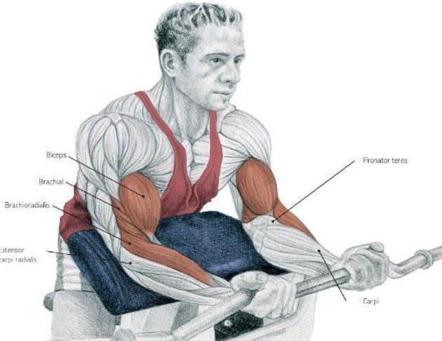 ejercicios biceps aumentar