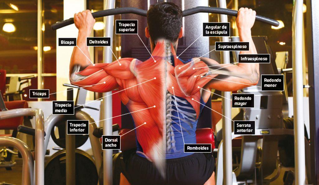 ejercicios aumentar dorsales