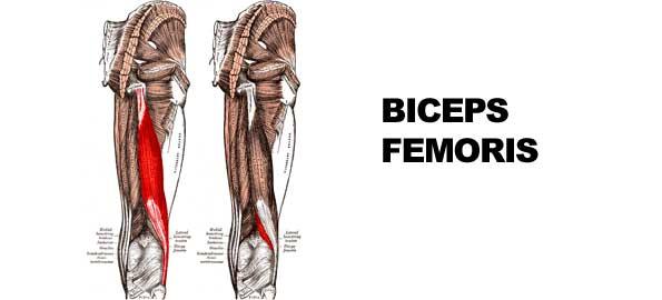 ejercicios para femorales